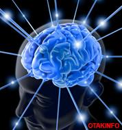 Otak Info