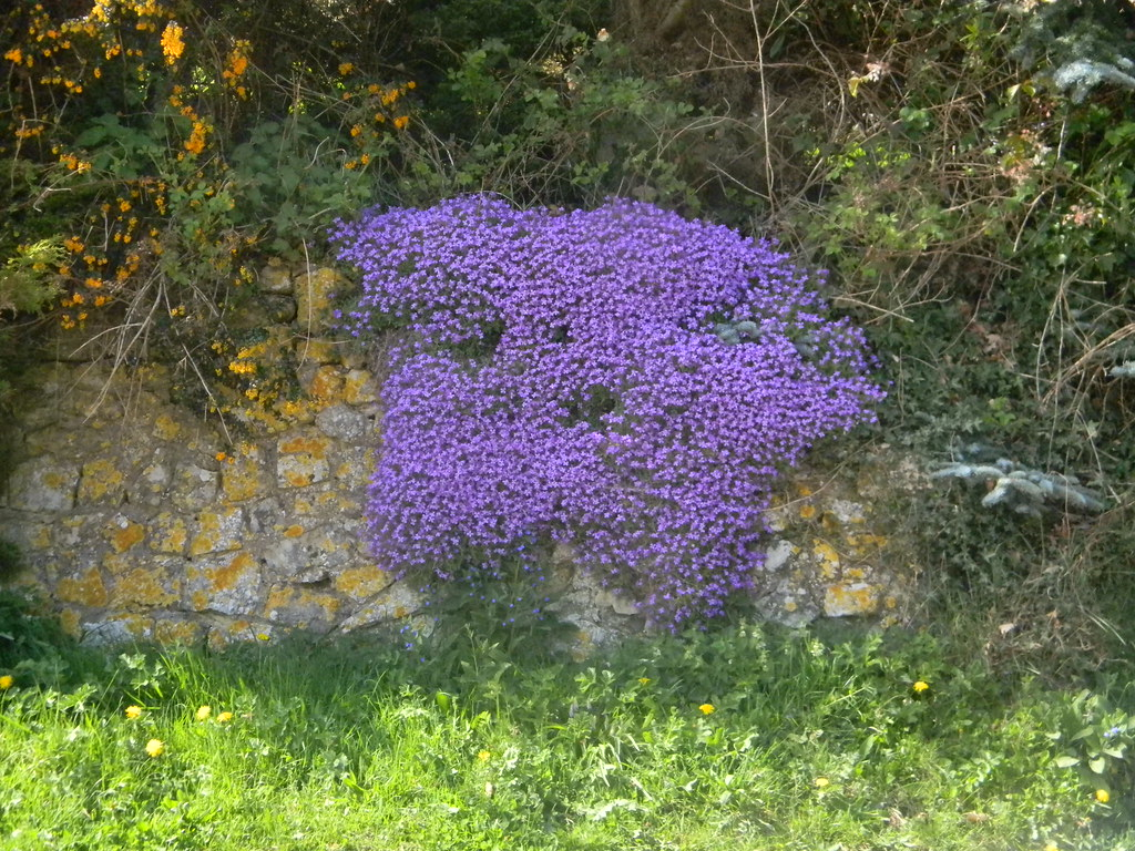 Splash of Colour Slightly incongruous in the middle of the countryside. But pretty all the same. Petersfield to Liss