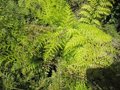 shrub(0.0), flower(0.0), tree(0.0), ostrich fern(0.0), ferns and horsetails(0.0), non-vascular land plant(0.0), temperate coniferous forest(0.0), moss(0.0), spruce(0.0), woodland(1.0), vascular plant(1.0), branch(1.0), leaf(1.0), plant(1.0), flora(1.0), green(1.0), forest(1.0), biome(1.0), vegetation(1.0),