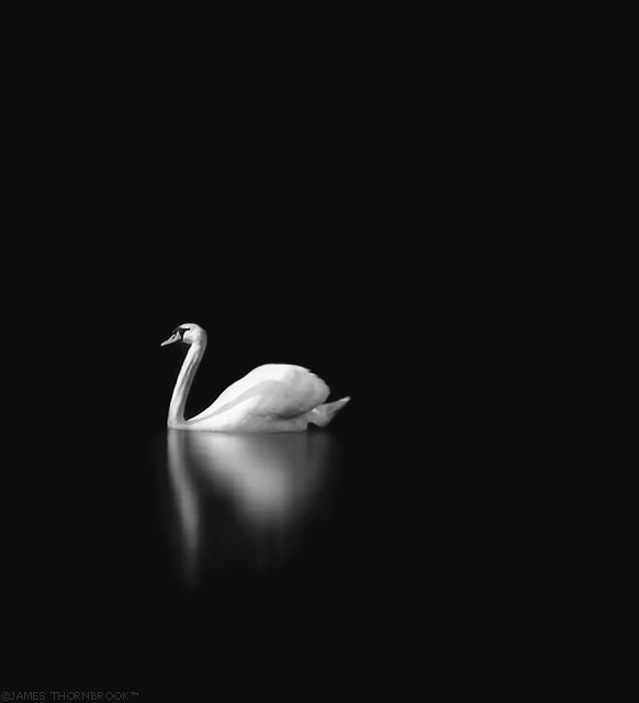 Swan at Night by James Thornbrook