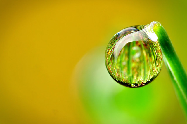 Morning Dew Drop | Flickr - Photo Sharing!: www.flickr.com/photos/xbn83/5645258775