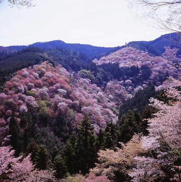 Beautiful Places In Japan Tumblr: 5693349049_f2a4f49dd9_z.jpg