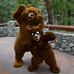 Koda and Kenai still meeting in Redwood Creek Challenge Trail