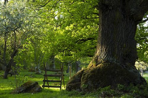 tree oak sweden meadow pasture trunk sverige östergötland canon50mmf14usm bjärkasäby canoneos7d
