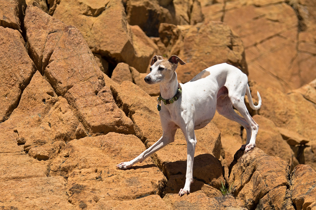 Wellie on the rocks