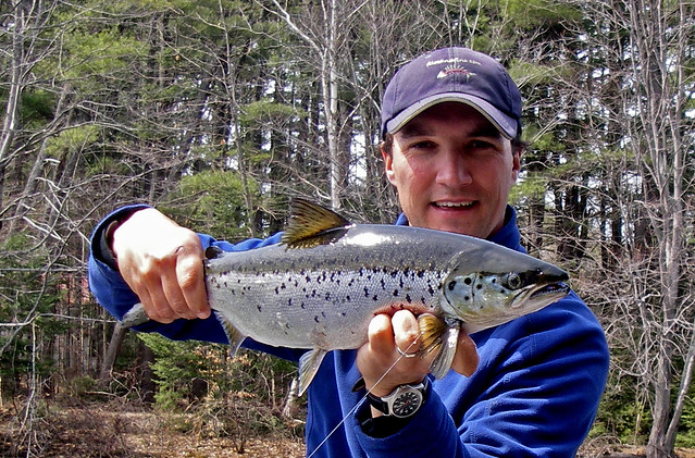 Sebago Spring Salmon