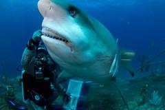 animal, fish, great white shark, shark, sea, marine biology, scuba diving, lamniformes, underwater, reef, requiem shark,