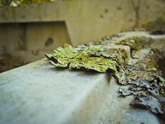 Algae 2