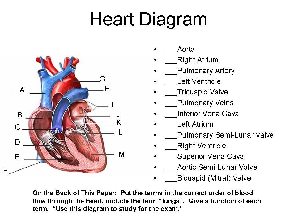 Unit 7 Part 1 Blood And Heart