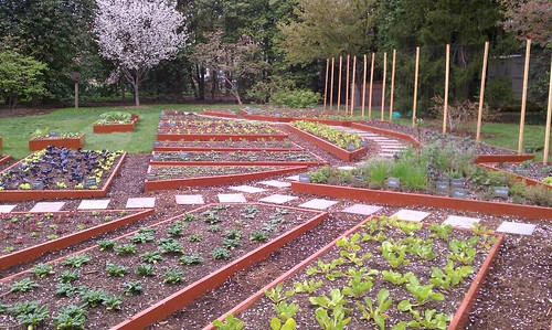 Skippy 39 S Vegetable Garden Election Day Question