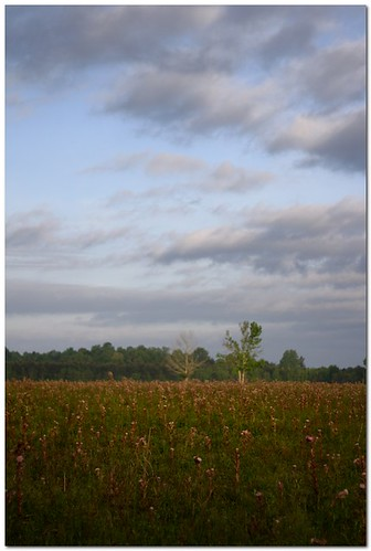 thistle weed field morning nature wildflower louisiana spring canonef50mmf18ii mrgreenjeans gaylon gaylonkeeling