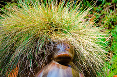 Duck with Afro in my garden (3 of 2). By Thomas Tolkien