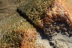Moeraki boulder close-up