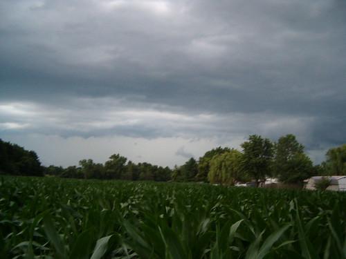summer sky field illinois corn thunder fosterburg