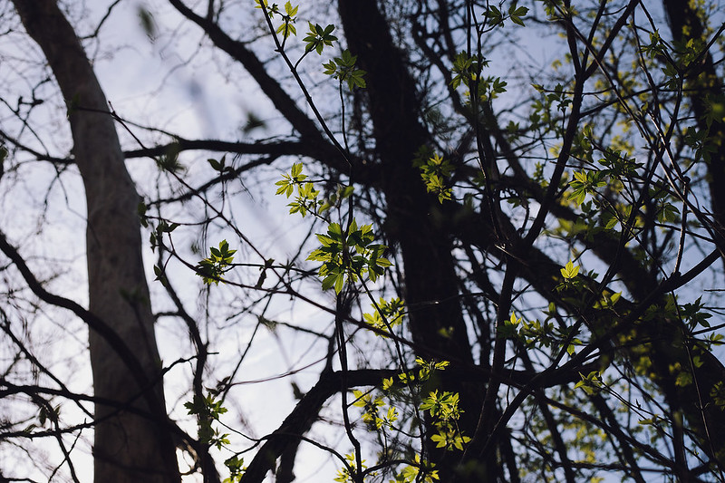 Kisiel-2014-04-19-0031