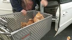 Once again, Zeus & Phoebe OFF leash at PetSmart