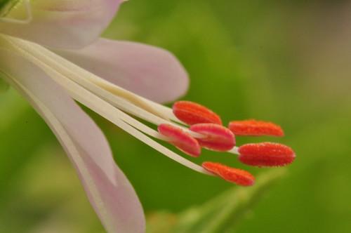 Macro Flower1