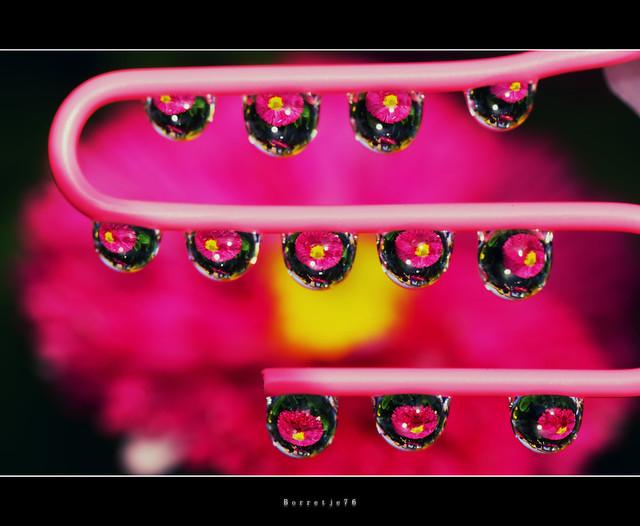 Friday 13 . . . . . . . . . . .Flowers