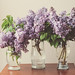 lovely lilacs.