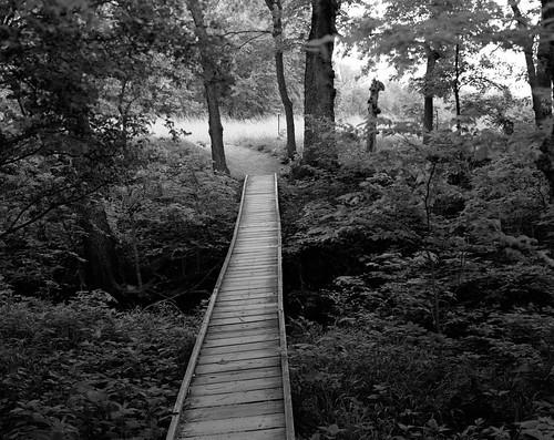 bridge bw usa creek iso100 footbridge hiking ks trail kansas 4x5 lf largeformat acros toyo konzaprairie konza acros100 ddx epsonperfectionv750 konzaprairietrail toyoaii 150mmapoosinonarn bwfp