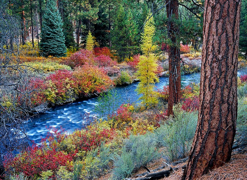 Shevlin Park and Tumalo Creek near Bend, Oregon