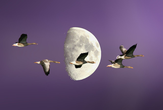 Geese and Moon refurbished