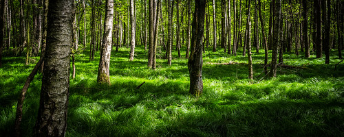trees green nature beautiful forest canon saxony natur wiese sachsen gras magical wald bäume birke chemnitz 24105 enchanting eos6d