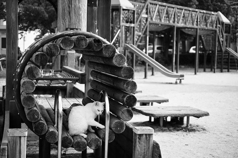Cat Memories 2014/05/23