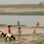 Kids Playing With Goats Near Ganges (Padma) River - Rajshahi, Bangladesh