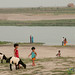 Kids Playing With Goats Near Ganges (Padma) River - Rajshahi, Bangladesh