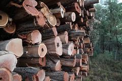 logging, wood, lumber,