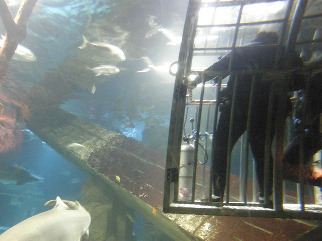 Shark Dive Xxii Photos From Long Island Aquarium