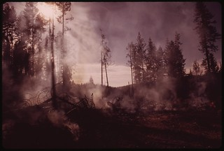 """In August, 1973 a major forest fire swept through 17,470 acres of the western slopes of the Sierra Mountain Range near Sonora. Trees still burn on fringe of cleared area. This part of the burn area is called """"granite fire,"""" September 1973"""