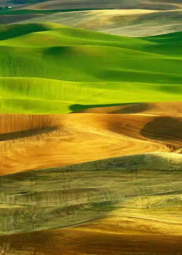 Palouse Patchwork by campviola