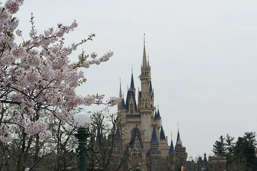 例の場所にも桜が咲いているんですね〜