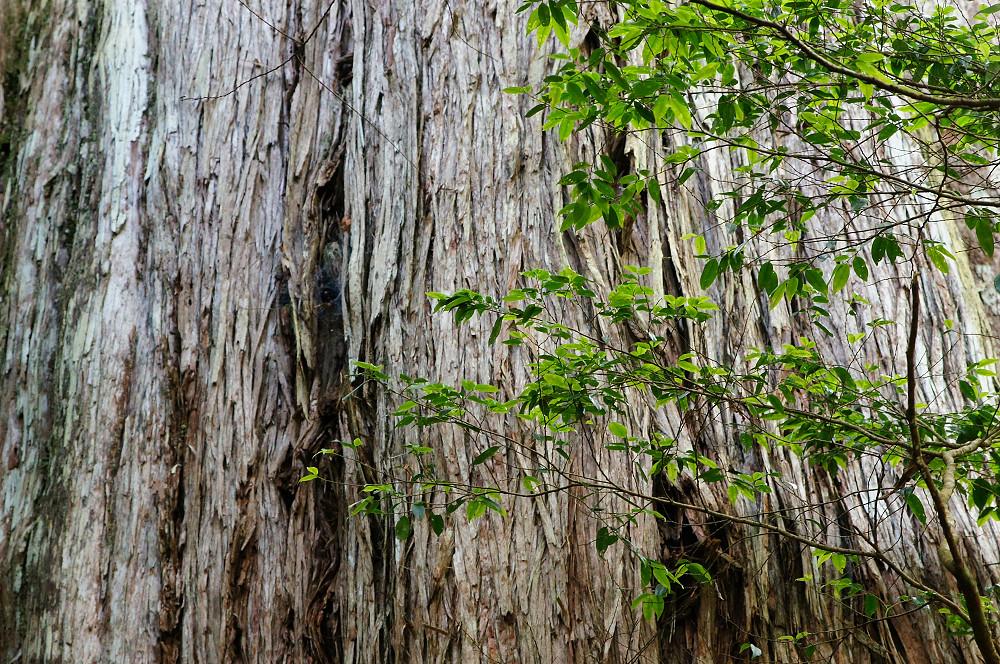 巨木群,與往拉拉山的路上-054