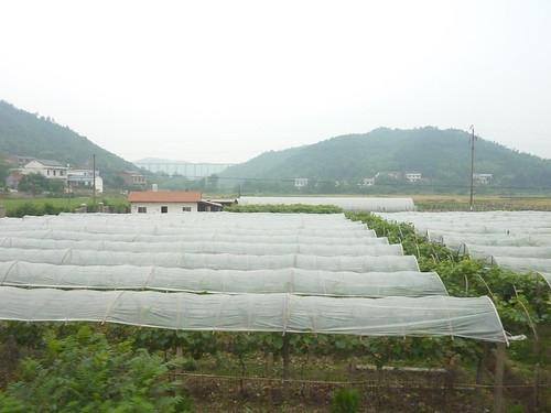 C-Hunan-Route Changsha-Hengshan (13)