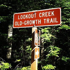Lookout Creek Old-Growth Trail at H.J. Andrews Experimental Forest
