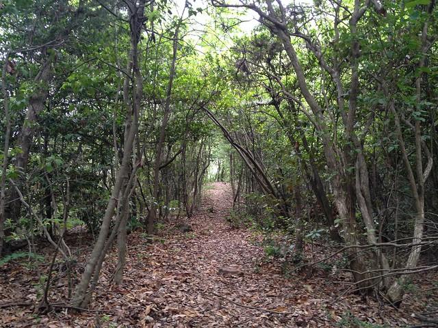 石谷登山道 緑のトンネル
