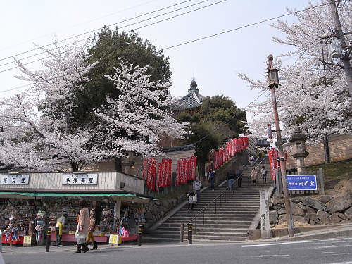 奈良公園の桜など-01