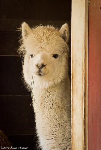 Peeking through the door by Genny164
