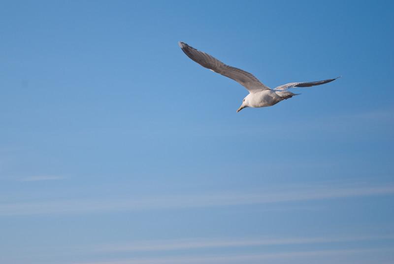 """impressive! """"Отчего люди не летают так , как птицы?""""- 17:25:45 DSC_3578"""