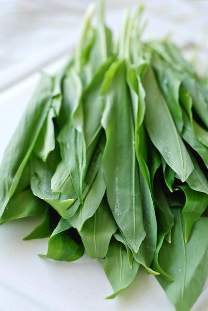 karulauk/ramson, wild garlic