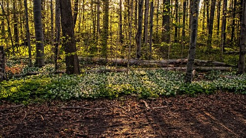 Sunrise in the woods by Alan Norsworthy