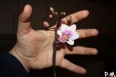 fleurmain