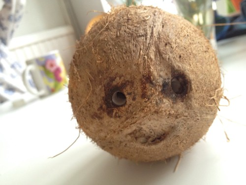 Hello there little scary shrunken-head coconut fella