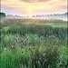 Return to Waltham Brooks. by John Dominick