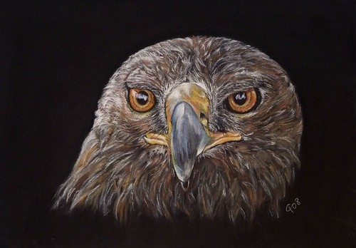 Eagle, Charcoal Drawing