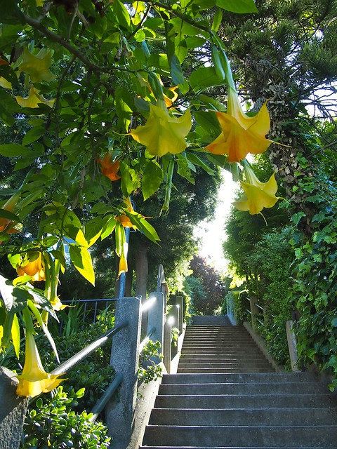 Greenwich Steps, San Francisco