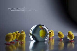 REFLECTING GLASS BALL CHICKS
